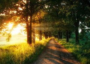 light the way
