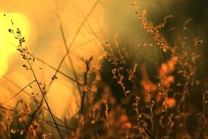 sunset melody