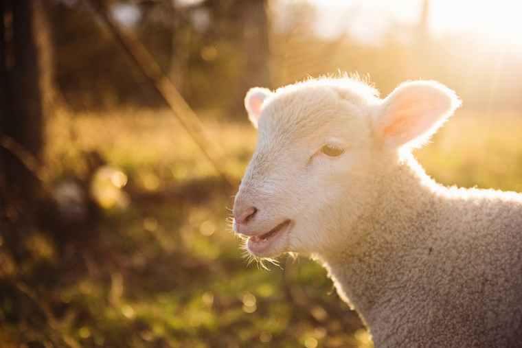 Shepherd Series
